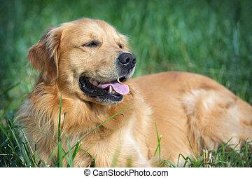 portrait, jeune, beauté, chien
