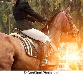 Horse rodeo rider male saddle dressage