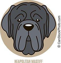 portrait, neapolitan, mastiff