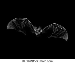 Portrait of a bat in flight on a black background. Halloween