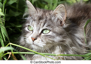 portrait of a beautiful cat in nature