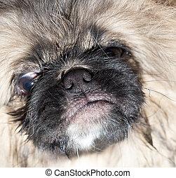 portrait of a beautiful fluffy dog