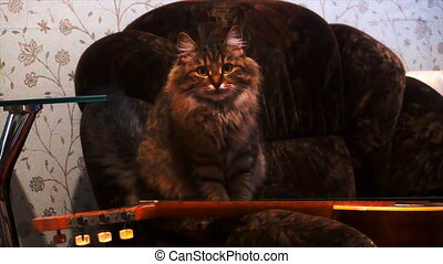 portrait of a beautiful gray cat in a dark room.