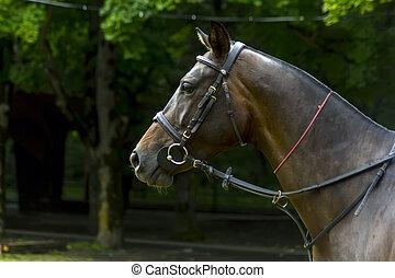 Portrait of a beautiful horse.