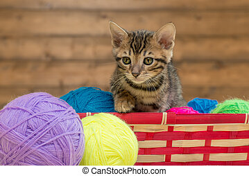 portrait of a Bengal kitten with balls of thread in a wicker basket