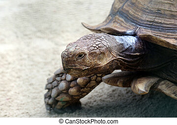 portrait of a big turtle