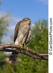 bird of prey on a tree branch