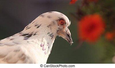 portrait of a bird