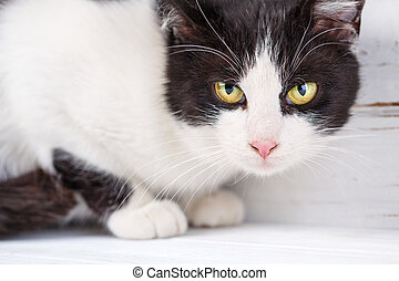 Portrait of a black and white cat on a light background.