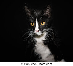 portrait of a black and white cat with yellow eyes on a dark background close up