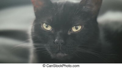 Portrait of a black cat.