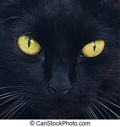 Portrait of a black cat outdoor