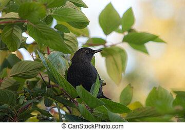 blackbird on a green branch