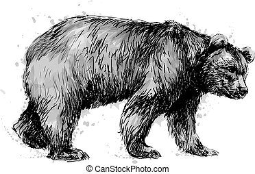 Portrait of a brown bear on white background