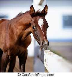 Portrait of a brown foal. Muzzle of a foal. Brown foal. Small horse. Foal with an asterisk on a forehead.