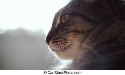 Portrait of a cat. 4K video 25 frames