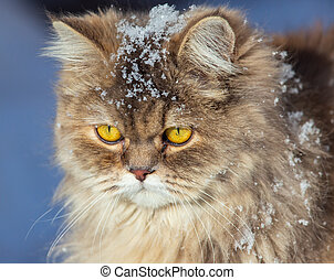 Portrait of a cat in the snow in winter