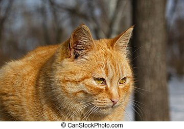 Portrait of a cat in winter