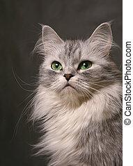 Portrait of a cat close-up in studio