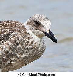 Portrait of a common gull on the beach on a summer day...
