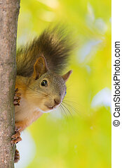 curious squirrel close up