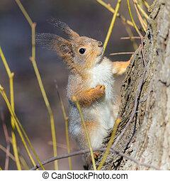 curious squirrel near a tree