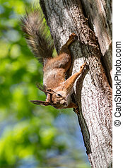 curious squirrel on a tree