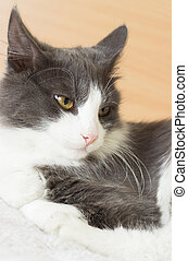 Portrait of a cute black and white cat