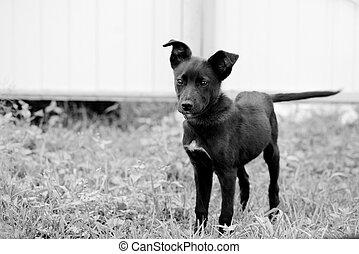 Portrait of a cute black puppy in the yard close up