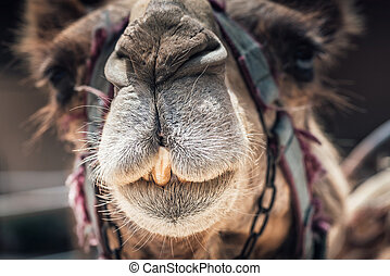 Portrait of a cute camel