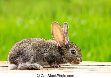 Portrait of a cute fluffy gray rabbit with ears on a natural green background