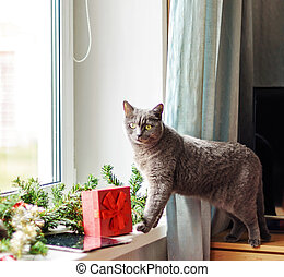 Portrait of a cute gray cat lying on the windowsill, decorated with a Christmas garland and gifts. Looks at the camera.