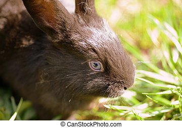 Portrait of a cute little gray rabbit on green grass in the farm yard on a sunny day