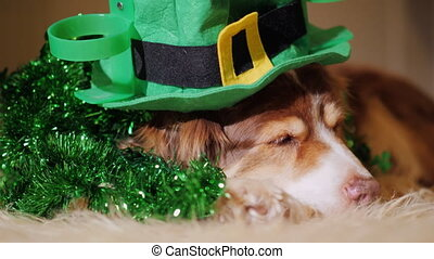 Portrait of a cute shepherd dog in St. Patrick's day...