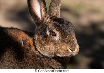 Portrait of a cute small rabbit in the garden