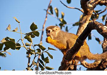 Portrait of a cute squirrel monkey .