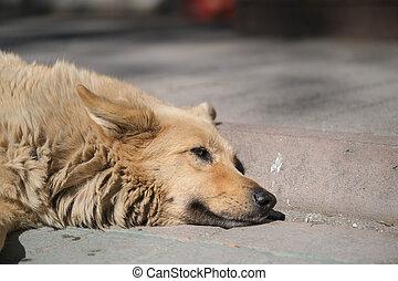 Portrait of a dog lying on the sidewalk