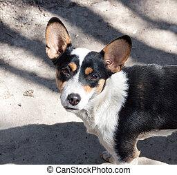 portrait of a dog. mongrel