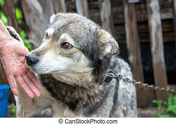 Portrait of a dog mongrel with the hand of the owner