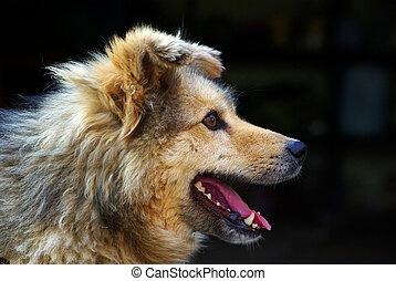 dog - portrait of a dog on black