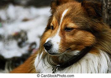 Portrait of a dog.