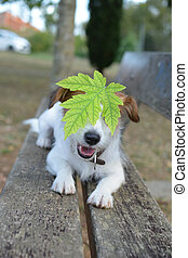 PORTRAIT OF A DOG WITH AUTUMN LEAVE ON THE HEAD SITTING ON A WOODEN BENCH PARK