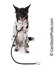 Portrait Of A Dog With Stethoscope