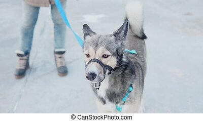 Portrait close-up dog. Dog look at the camera. Concept of love for animals. Dog walking concept. in the winter