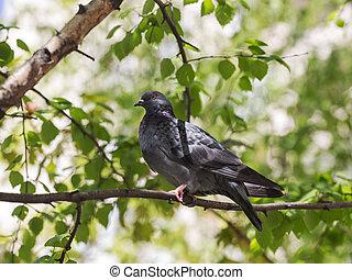 portrait of a dove in profile