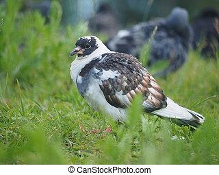 portrait of a dove