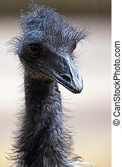 Portrait of a emu