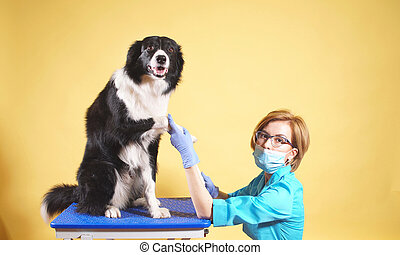 Portrait of a female veterinarian who takes care of Pets