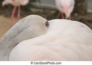 Portrait of a Flamingo.