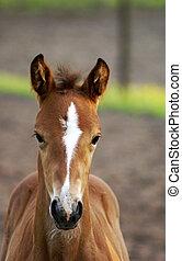 Portrait of a foal. - Beautiful portrait of a foal.